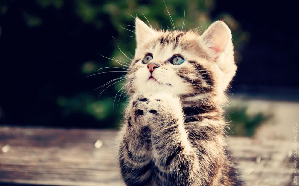 Cute-Cats-cats-33440930-1280-800.jpg